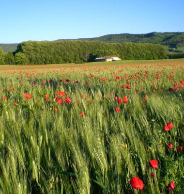 Provence-4.jpg