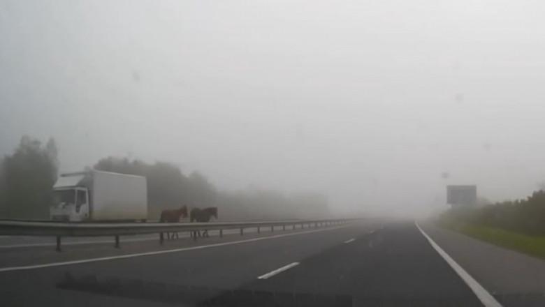 animale autostrada
