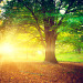 meteo vremea soare toamna verde shutterstock_139765534