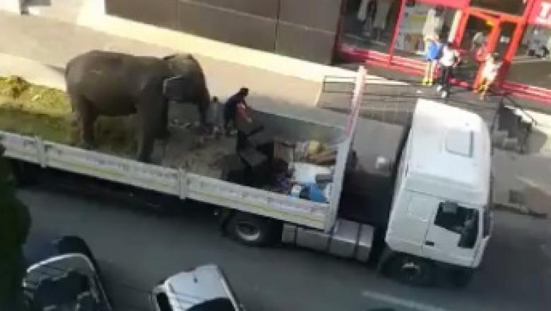 elefant pe platforma