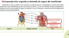 image-2018-09-3-22683074-41-organele-omului-indicate-gresit-manualul-biologie-clasa