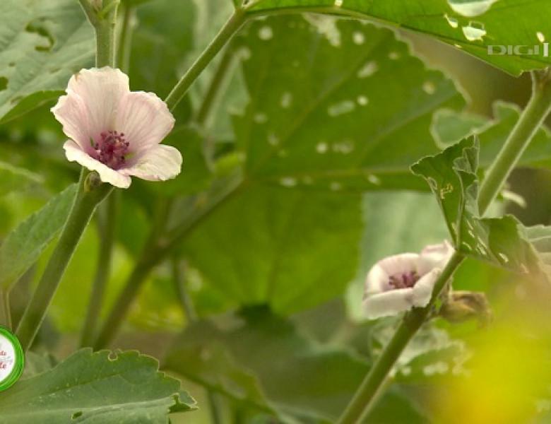 Plante-Nalba-1.jpg