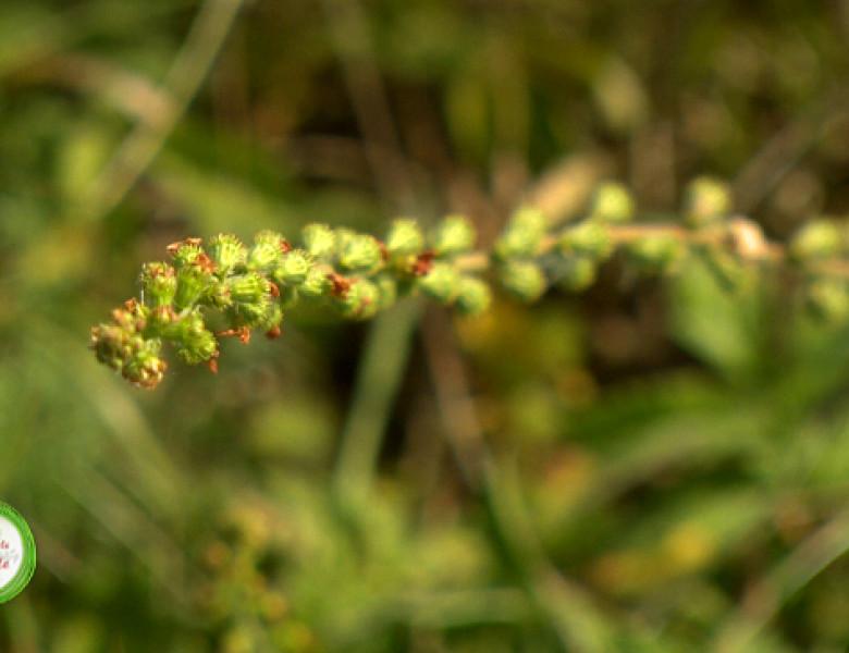 Plante-Turita-1.png