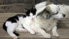 pisica caine shutterstock_72427891