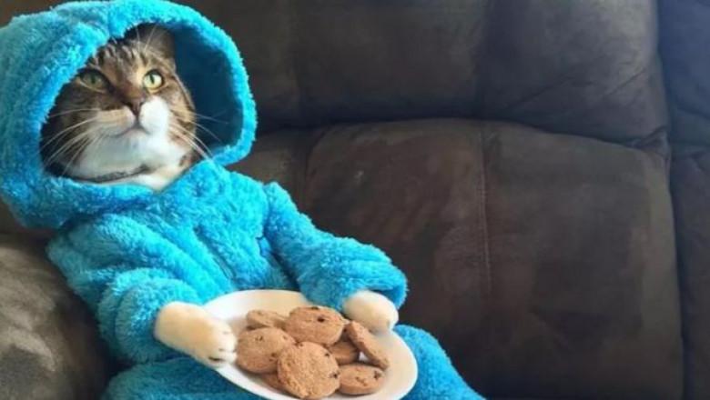 poza petrecere pijama pisica