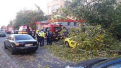 copac-cazut-4