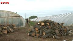 lemne solarii