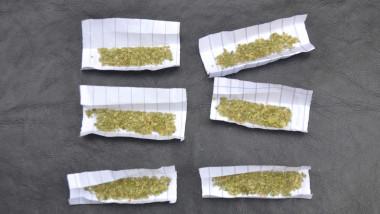 foite materie vegetala Jandarmerie