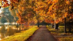 toamna parc soare frunze copaci