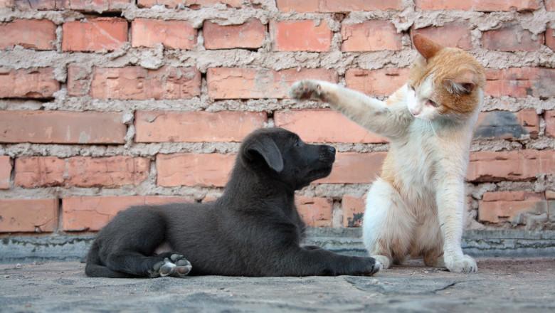 catel caine pisica shutterstock_155774711