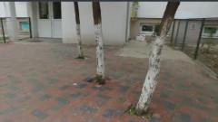 copaci in pavaj