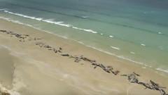 balene-pilot-esuate-noua zeelanda