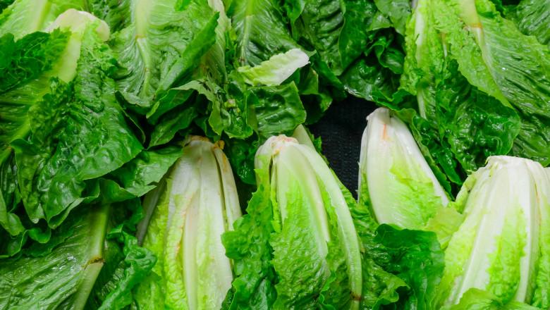 romaine lettuce salata verde_shutterstock_279924581