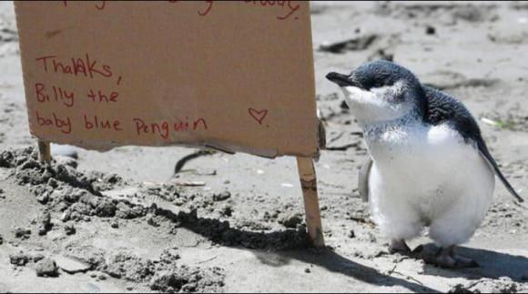 billy pinguinul - fb
