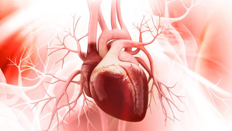 inima corp omenesc