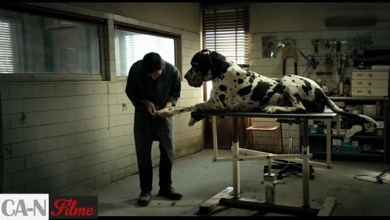 ca-n filme dogman