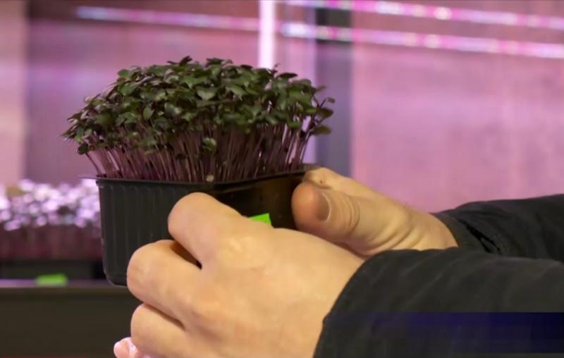 microplante2