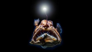 ocean, pești de mare adâncime