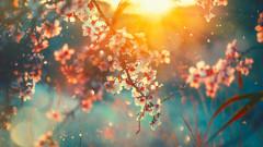 primavara, copac, flori, soare