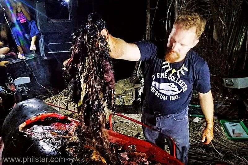 Biologii marini au fost socati. Ce au gasit in stomacul unei balene moarte, dupa ce a esuat pe plaja