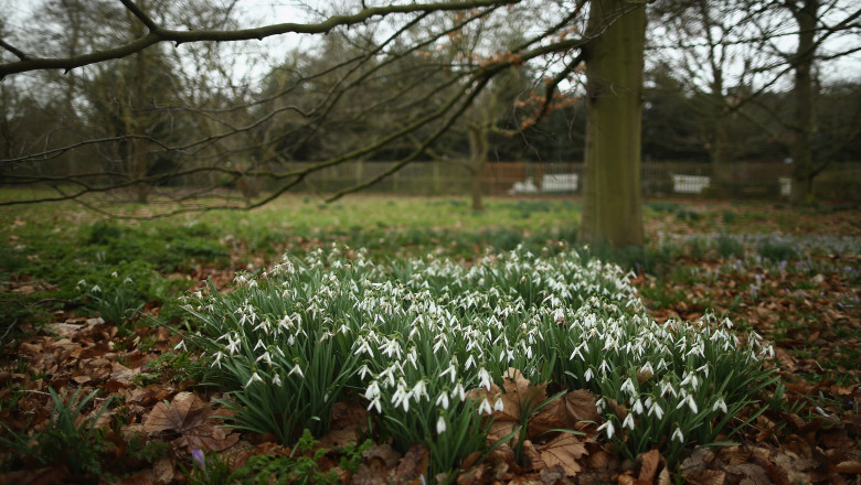 The First Day Of Spring At Kew Gardens