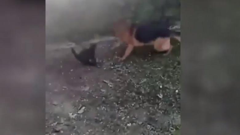 pisica omorata