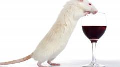 soarece-pahar-vin-alcool-shutterstock_7591453