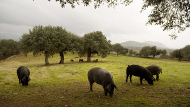 Spanish Jamon Iberico Industry Prepares For Busy Christmas Period