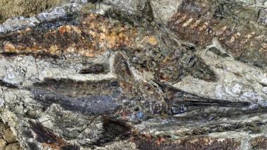 pesti fosilizati asteroid