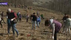 plantare copaci cluj