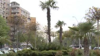 palmieri2
