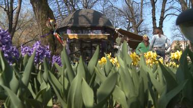 flori parc Oradea