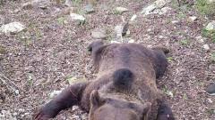 urs ucis colti