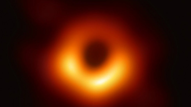 gaura neagra1