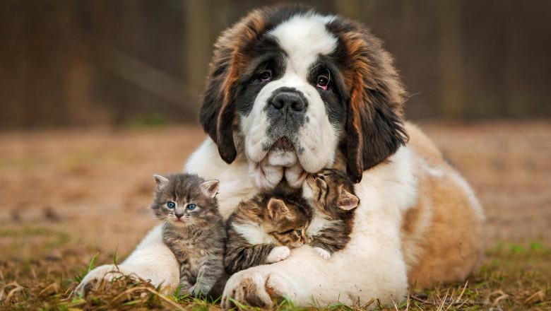 catel pisici pui shutterstock_170544845