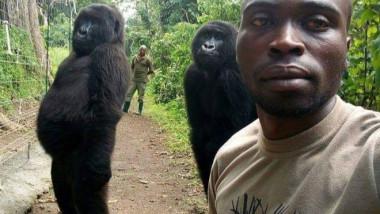 gorile selfie