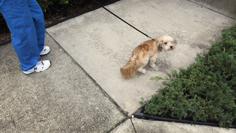 Condominium Assoc. To Begin DNA Testing On Dog Excrement To ID Owners Who Don't Clean Up
