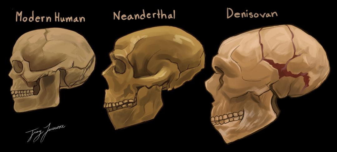 Descoperire crucială despre o specie umană misterioasă care a trăit în urmă cu 160.000 de ani. Cum arătau denisovanii