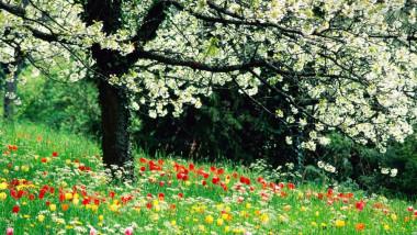 meteo flori primavara