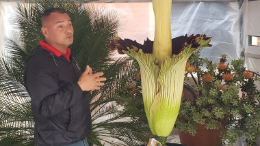 cea-mai-mare-floare-din-lume-miros-de-cadavru-twitter