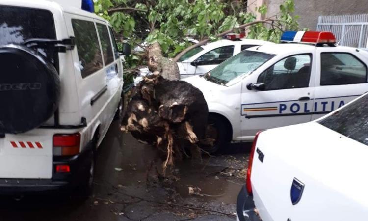 Trei masini de Poliţie au fost lovite de un copac, in Braila