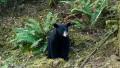 urs negru oregon