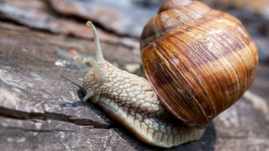 close-up of a snail with a shell