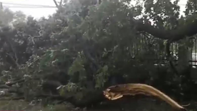 copac smuls botosani