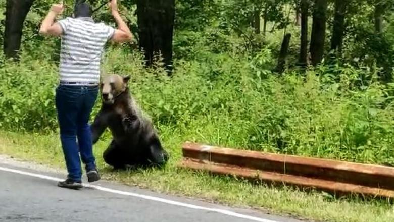 Majdnem áldozat lett egy felelőtlen fiatal, aki kézből próbált etetni egy medvét