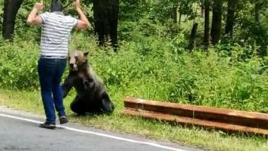 am-atacat-urs-cetatea-poenari-vidraru