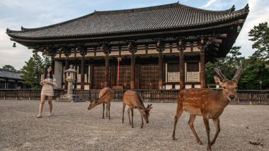 Nara's Wild Deer