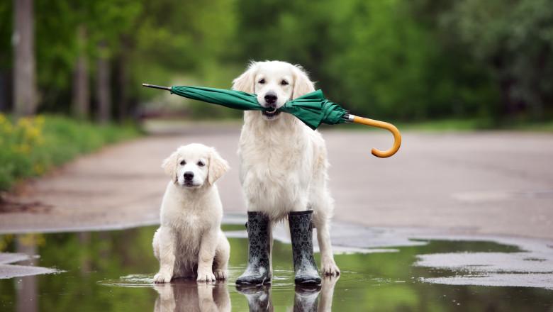 ploaie, ploi, vreme ploioasă, vremea, prognoza meteo