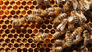 Beekeepers Report Higher Loss Rates In Bee Populations