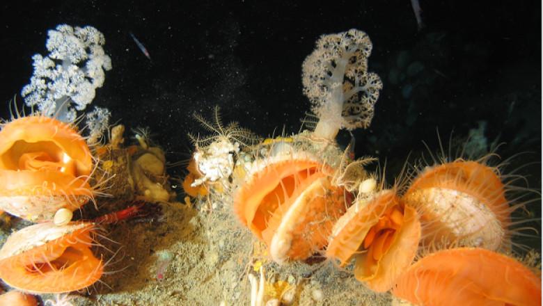 noi specii descoperite pe fundul oceanului atlantic, biodiversitate
